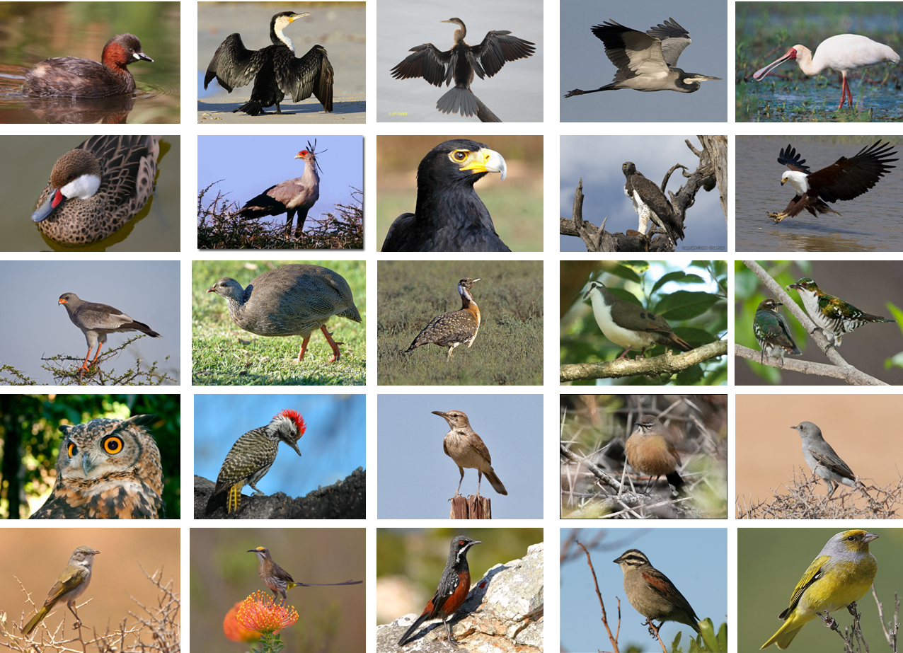 Birds of the Klein Karoo.png